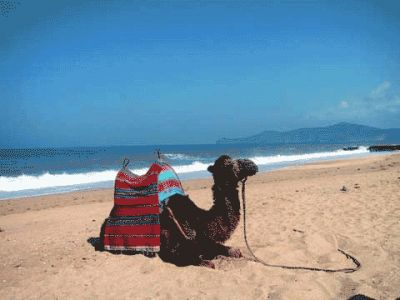8003_camel_smir_beach_big.jpg