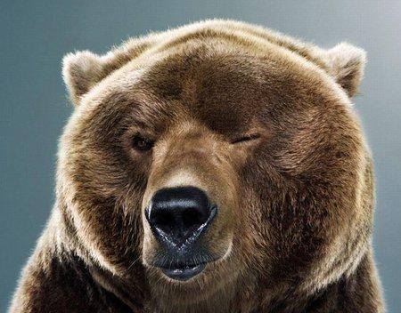 bear.jpg.0ba9d8862508d6c88f38026337bd25e8.jpg