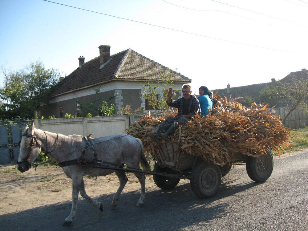 romanian-horse-car_st.jpg