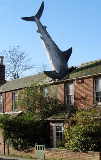 shark_big.jpeg