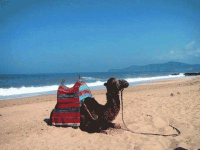 8003_camel_smir_beach_big.jpg